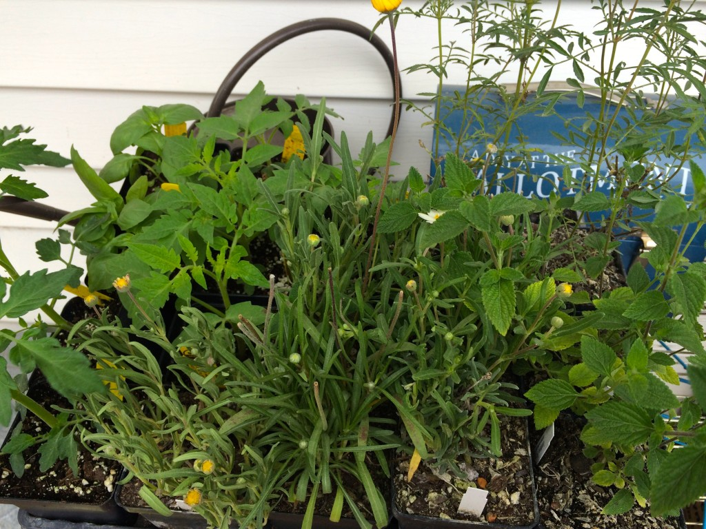 Blanton Plant sale buys