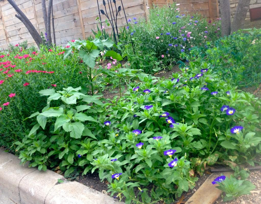 Experimental seed garden April