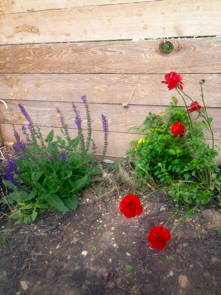 Gruesome gardening II