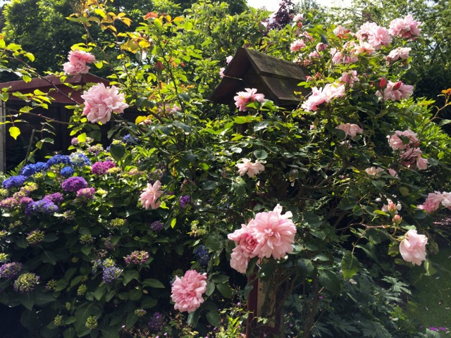 A pink rose bird house
