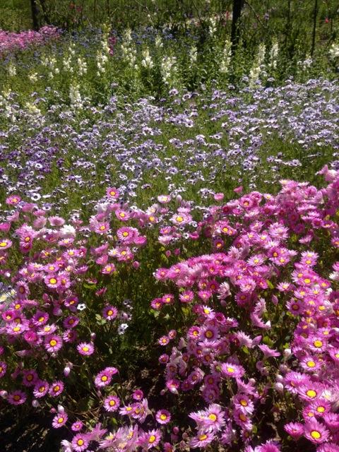 flower mass