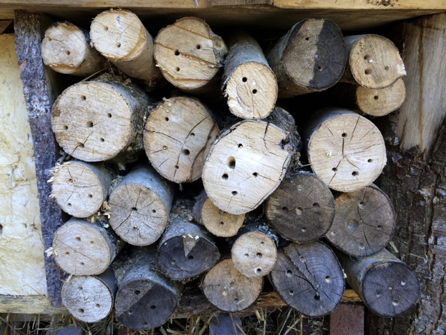 insect hotel II