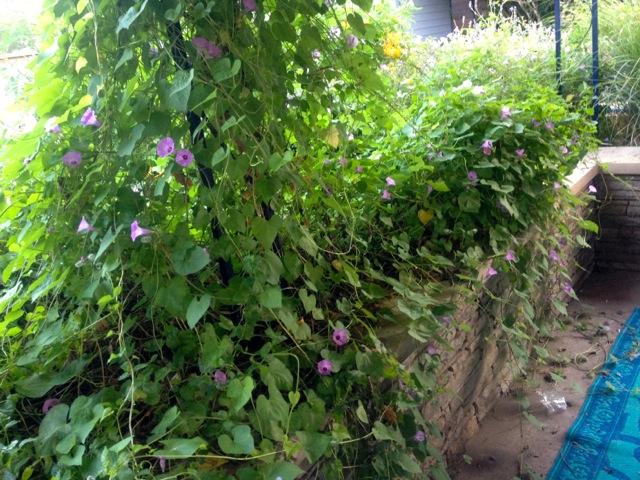 lost garden cloverleaf III