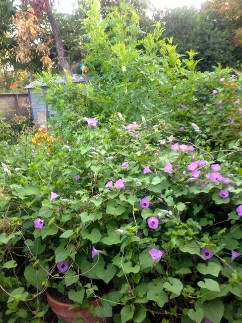 lost garden cloverleaf IV