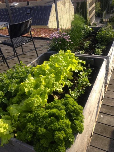 roof top garden I