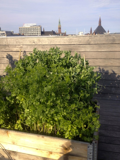 roof top garden II