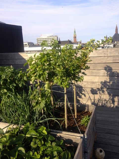 roof top garden III