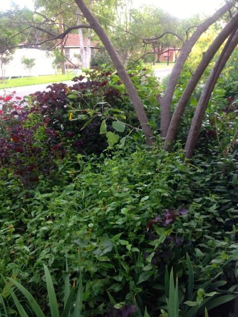 side garden IV