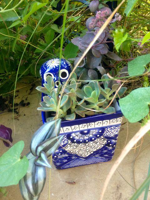 blue pot skull