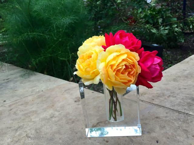 pink yellow rose III